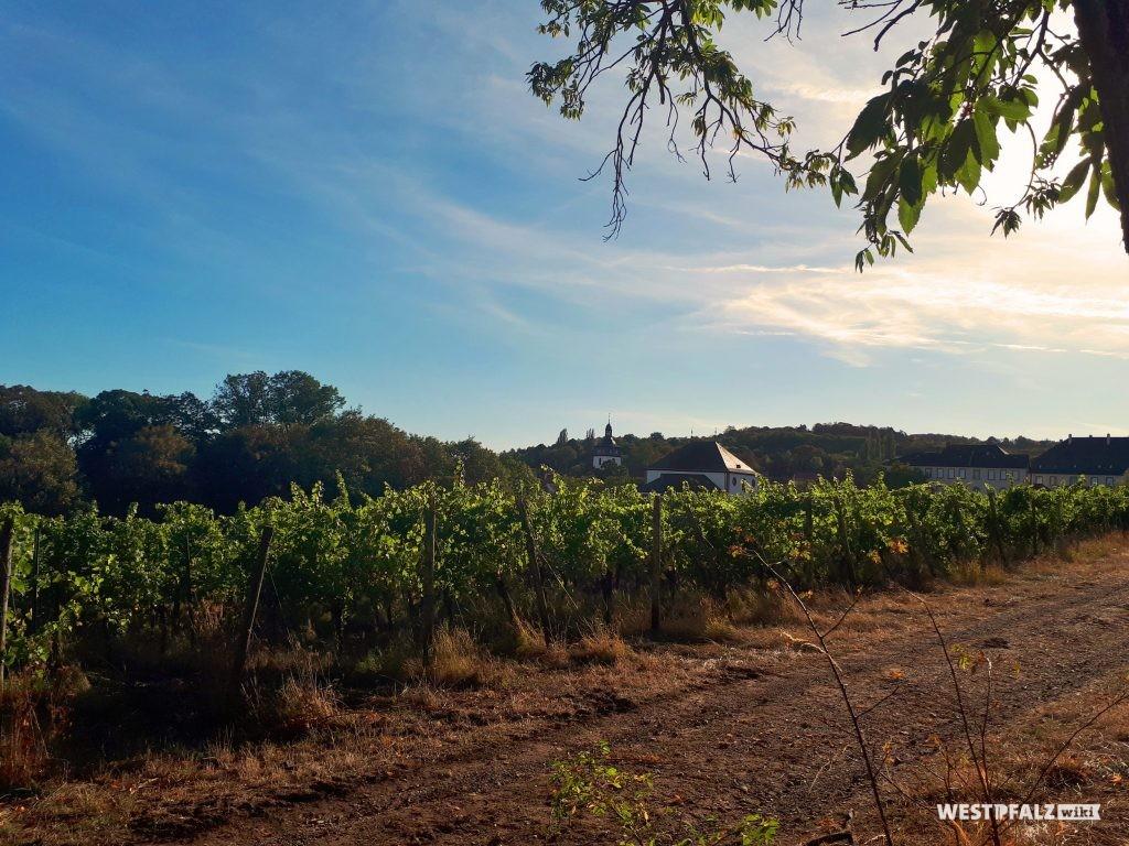 Blick von Nordosten über die Weinreben des Terrassengartens des Barockschlosses in Kirchheimbolanden.