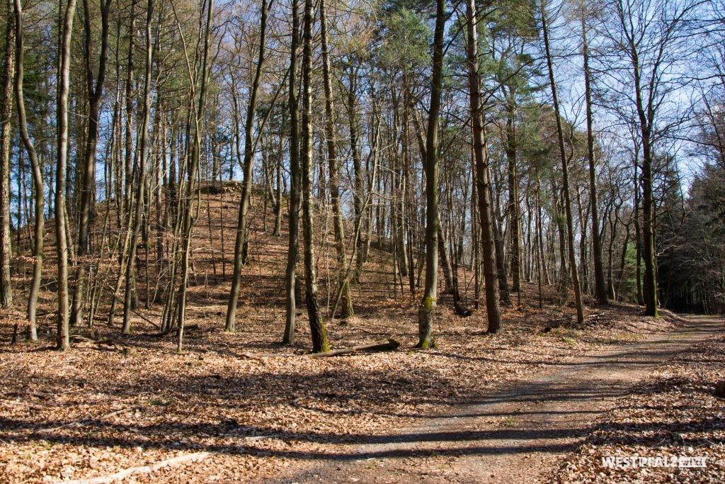 Burg am Wanderweg aus der Richtung vom Heinzental