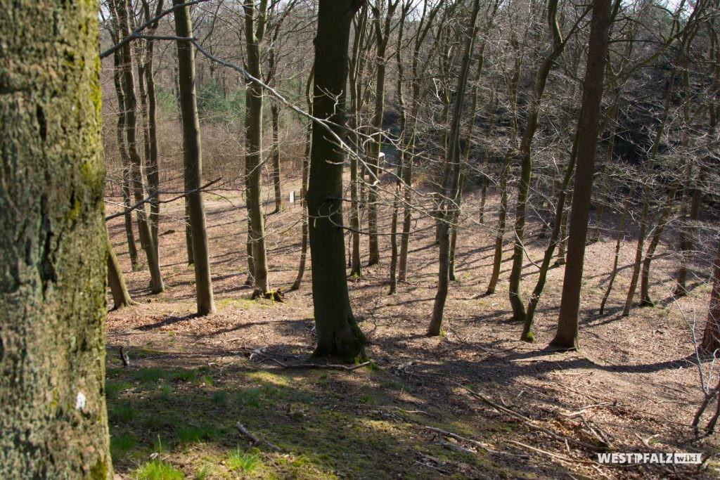 Blick vom ehemaligen Burghügel in Richtung Süden auf die Wanderwege und die Infotafeln