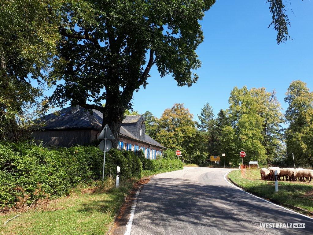 Das Forsthaus Johanniskreuz ist an der Kreuzung B 48 und L 499 inmitten des Pfälzerwaldes gelegen.