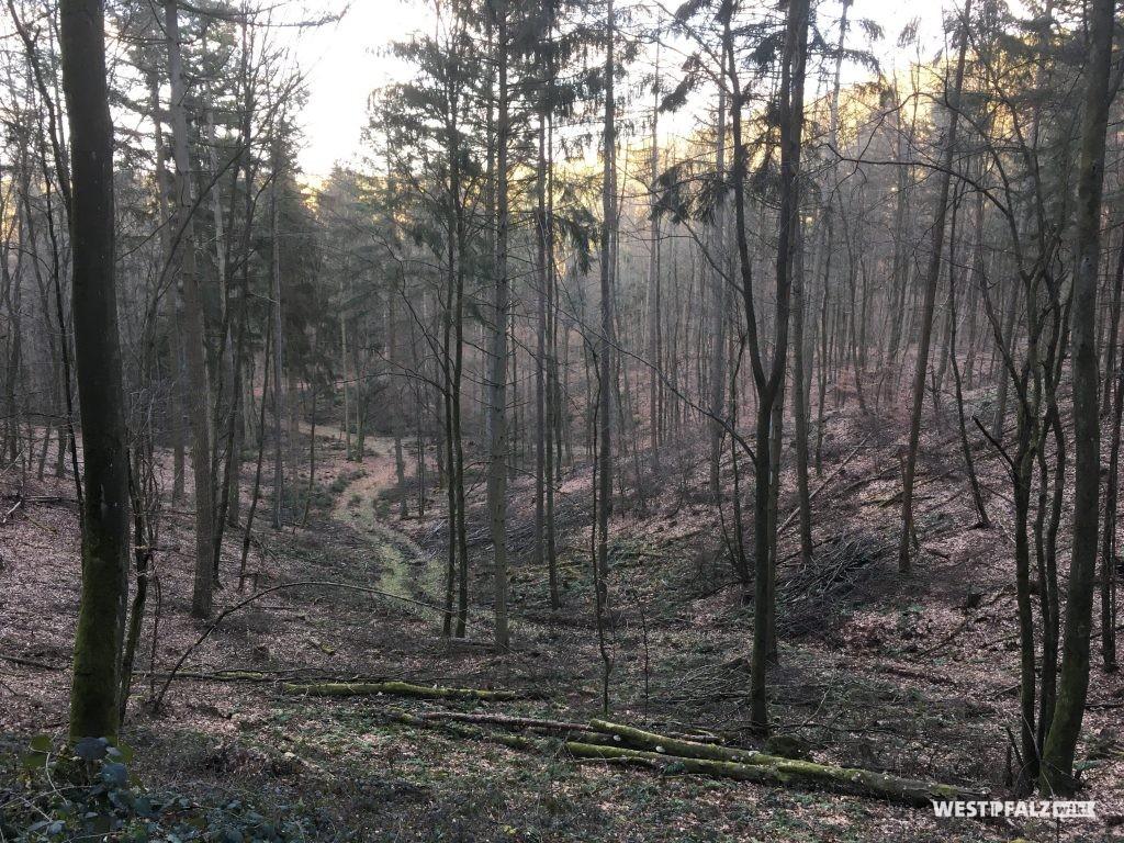 Der Sage nach soll alle sieben Jahre das Jammern der Ermordeten in diesem Teil des Waldes zu hören sein