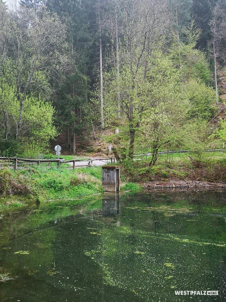Seewoog an der Ortseinfahrt Waldleiningen