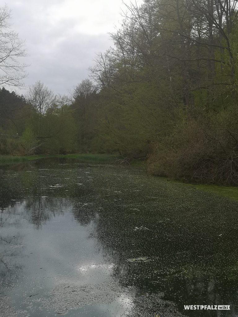 Seewoog an der Ortseinfahr Waldleiningen