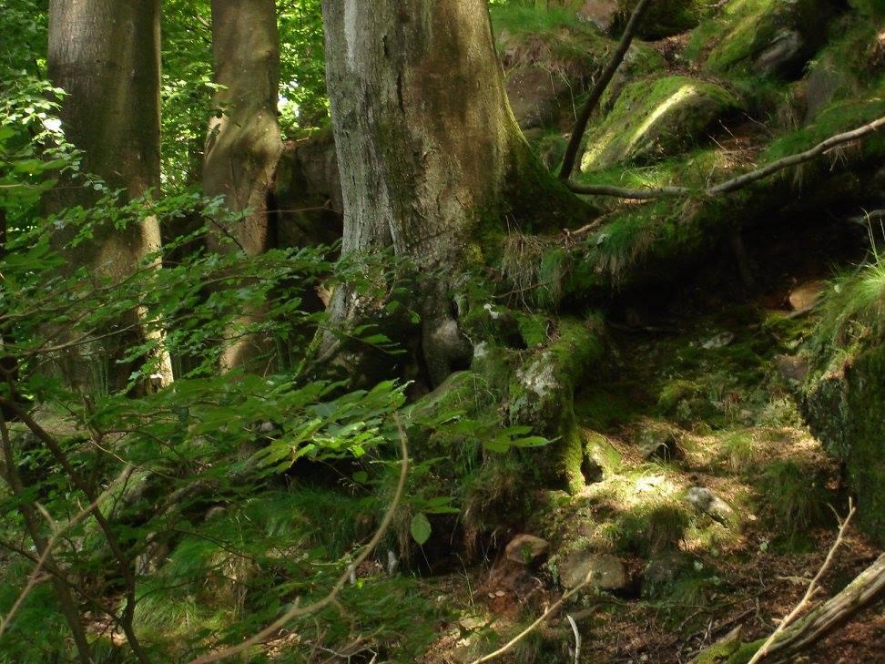 Steil abfallender Hang mit großen Bäumen im Fleischackerloch