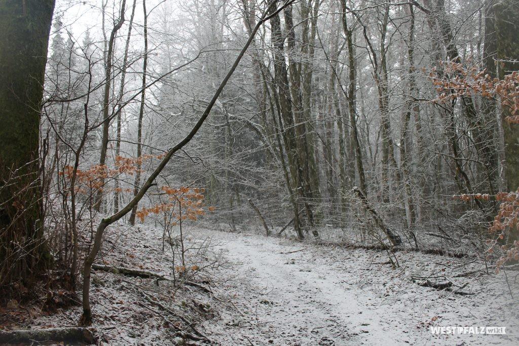 Waldweg an der Denkmalanlage