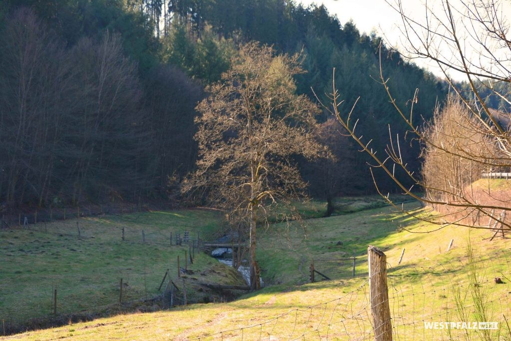 Verlauf der Moosalbe nahe der Klug'schen Mühle