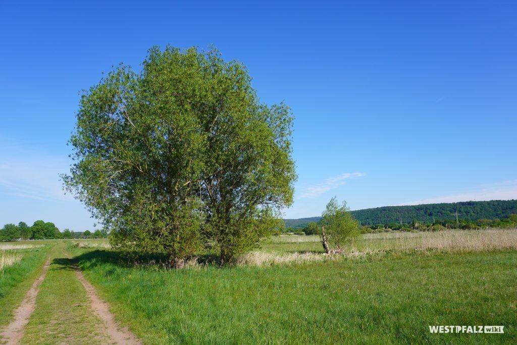 Gebiet des Scheidelbergerwoogs zwischen Hauptstuhl und Hütschenhausen