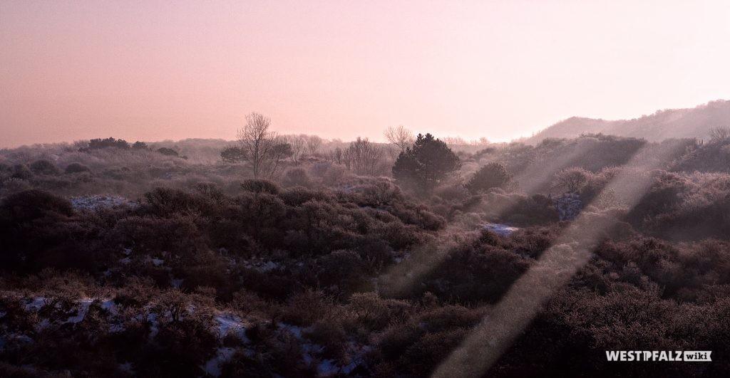 Mehlinger Heide bei Sonnenuntergang