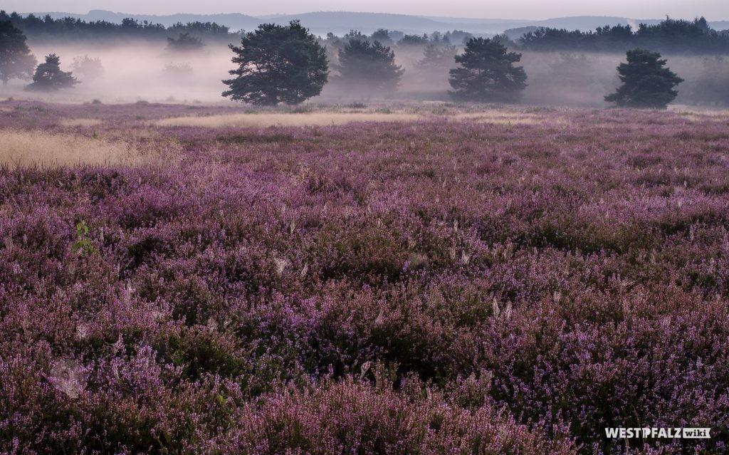 Mehlinger Heide bei Sonnenaufgang