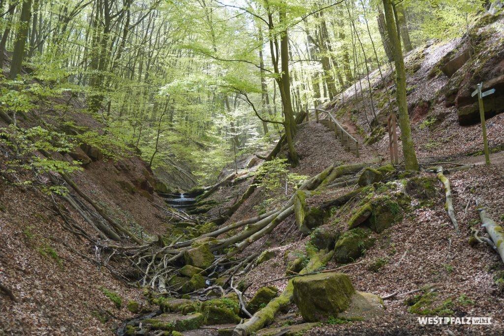 Elendsklamm in Bruchmühlbach
