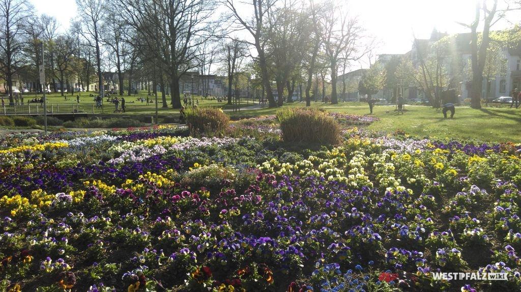 Blütenpracht im Stadtpark Kaiserslautern