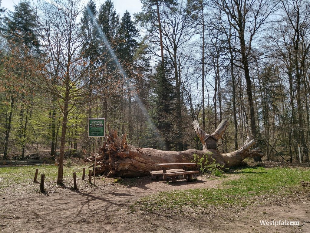 """Naturdenkmal """"Dicke Eiche"""""""