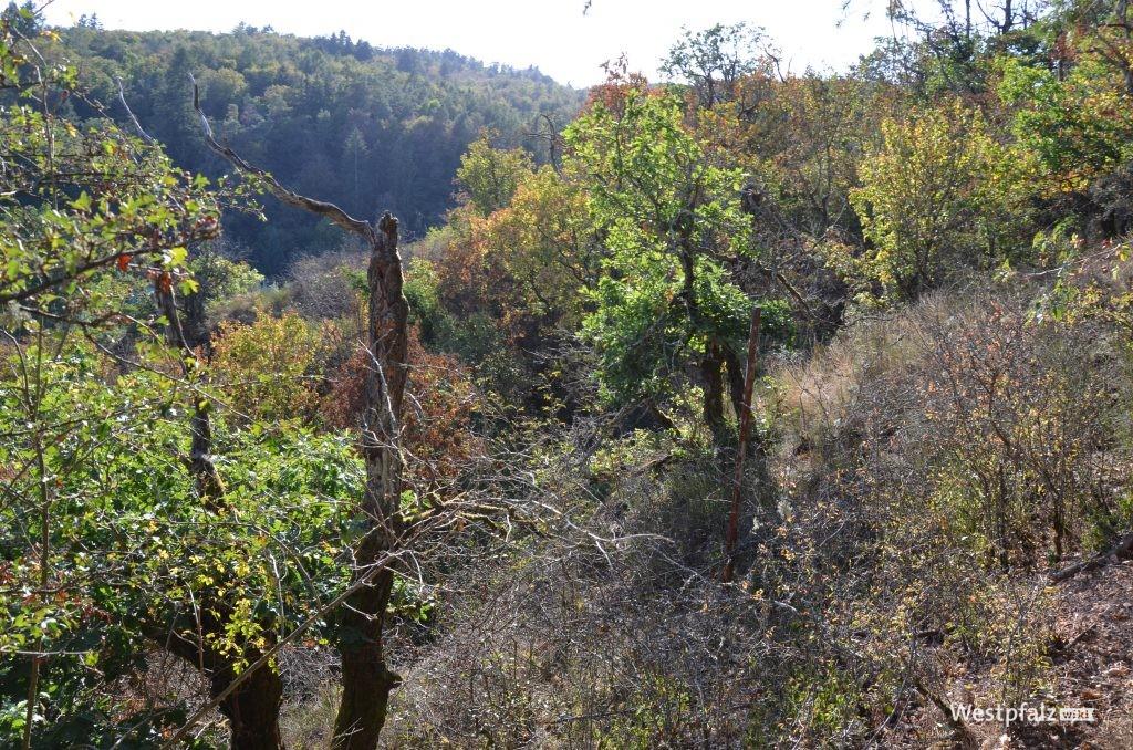 Nicht mehr begehbares Gelände des ehemaligen Felsengartens